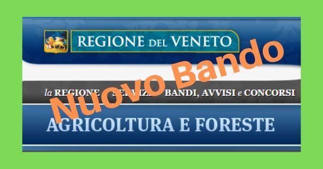 Bando regione Veneto